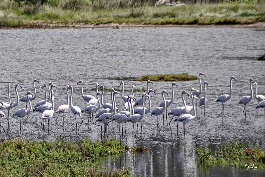 villa2be-villa-flamingo-24